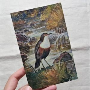#エア蚤の市 鳥の絵のポストカード⑤