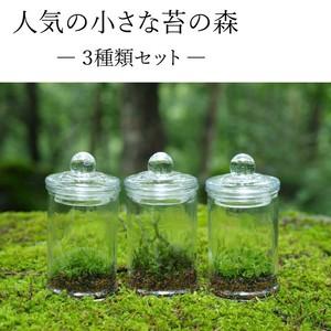 【苔テラリウム】小さな苔の森 マイクロポット 人気の3種セット
