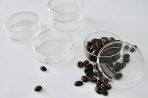 glass schale dead stock / 古いガラスシャーレ デッドストック
