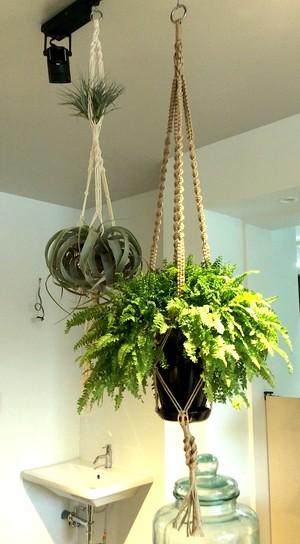 マクラメハンギング+植物セット
