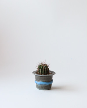 Pot. Hatと植物セット
