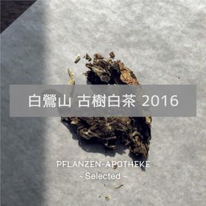 白鶯山 古樹白茶 2016