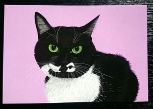 猫店長「スズ」のポストカード