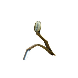 BEAK  bean