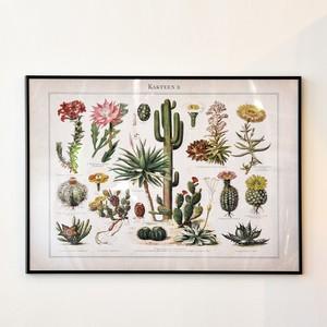 ポスター70cm×50cm /cactus picture book(フレーム付き)