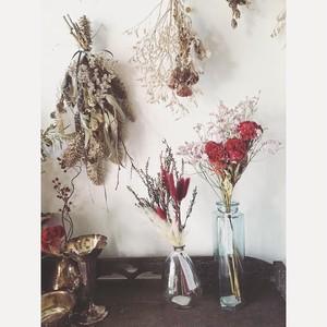 色と素材を楽しむ 植物と花瓶のコーディネートセット