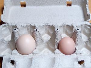 ほんまの卵 混合4パック(通常卵2、初卵2)