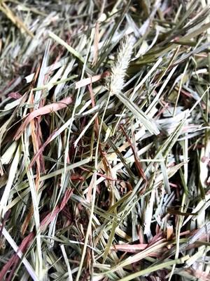 USチモシープレミアム【2番刈り】30kg 送料無料