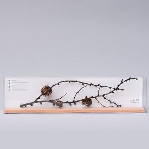 1102_カラマツの枝