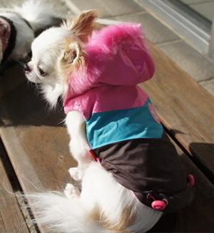 【アウトレット】★かわいい犬服ワンピ/ドレス  ビビットカラーダウンパーカー