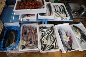 鮮魚BOX(小)