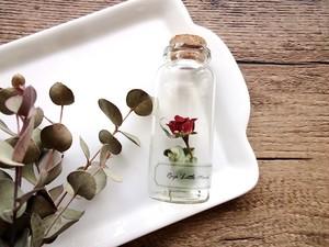 植物標本 Botanical Collection■No.R-18 バラ リトルマーベル