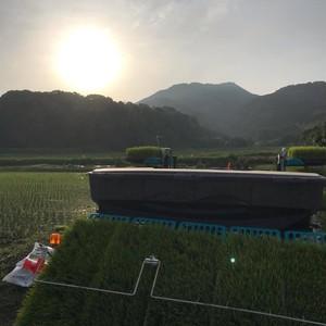 大自然米【3kg】精白米