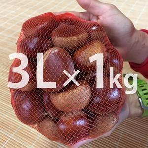 3Lサイズ 丹波栗(1kg)