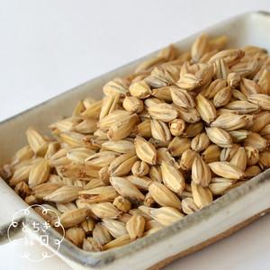 麦芽500g|農薬・化学肥料不使用