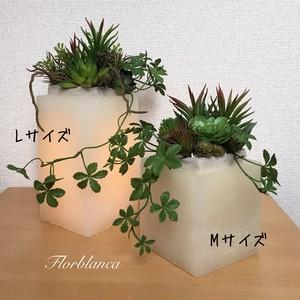 多肉植物のインテリアライト L