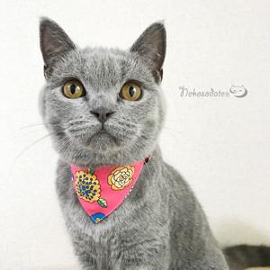 【サイケデリックフラワー柄】猫用バンダナ風首輪/選べるアジャスター 猫首輪 安全首輪 子猫から成猫