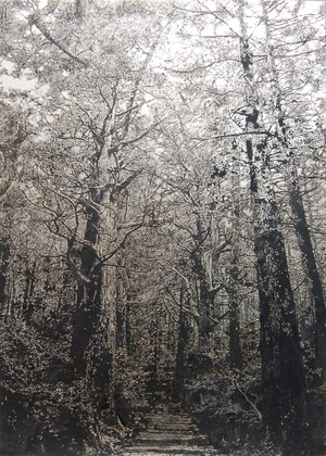 (原画)Tree XIII-Kumano Trail (熊野古道)