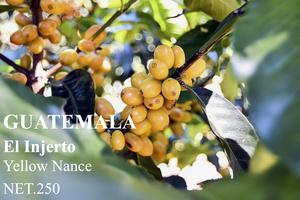 250g/エル インヘルト農園イエローナンス/グアテマラ