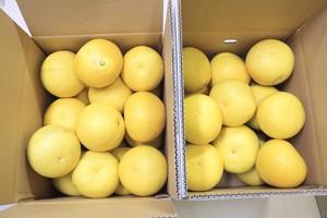 【ご家庭用】土佐文旦 20kg(10kg×2箱を1梱包) 2L〜4L混 (16~19玉)×2箱 送料込