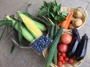 旬野菜セット『夏色』大サイズ、送料クール代込み