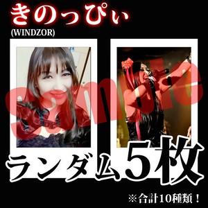【チェキ・ランダム5枚】きのっぴぃ(WINDZOR)