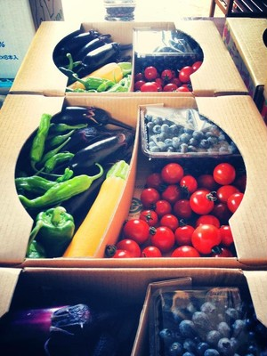 おまかせ無農薬野菜+自然栽培ブルーベリーセット Lサイズ