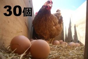 江田島地鶏のたまご 30個セット (産地直送・冷蔵便)