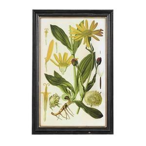 【K655-658B】Plant frame Type-B #アートフレーム #ボタニカルアート #アンティーク