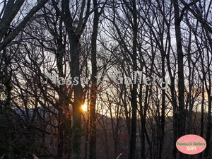 冬の森林と夕日~The sun going down between the trees~