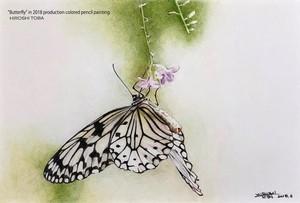 ポストカード -蝶-