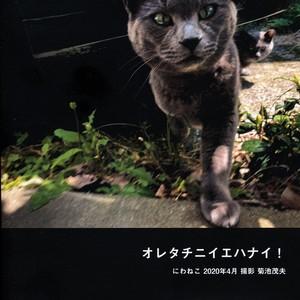 写真集「オレタチニイエハナイ! にわねこ2020年4月」