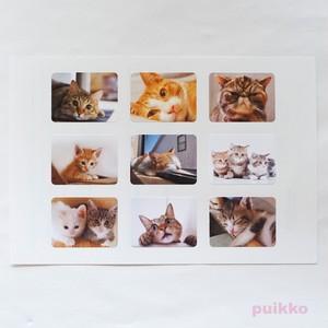 耐水写真シール 猫1