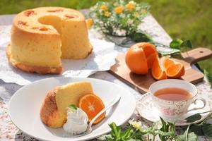 奄美のシフォンケーキ たんかん