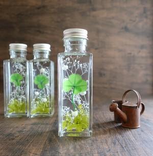 植物ノ瓶詰メ標本Collection 「四つ葉のクローバー」