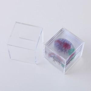 3D透明標本 ダンゴムシ ボックス 3Dデータ収録USBメモリ付 M01