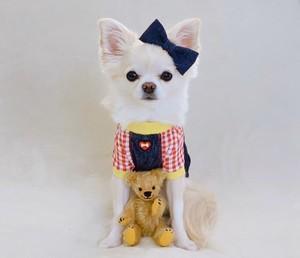 【クリックポスト送料無料★S即納】Fifi&Romeo ギンガムストレッチデニムポケットボーン 2019-4