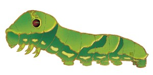 しおり  アゲハの幼虫