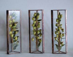 残1点【△植物標本】ドライフラワー:ミルタスベリー