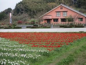 花の写真セット01(春)62枚セット