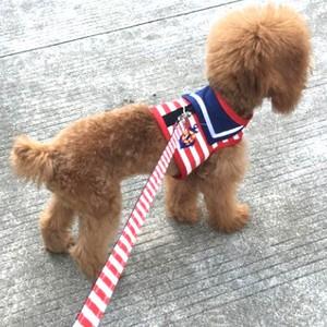 【Sサイズ/Mサイズ】犬服 ハーネス リード セット J193