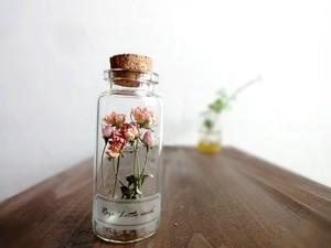 植物標本 Botanical Collection■No.R-7 ミニバラ 極小 ピンク リトルウッズ