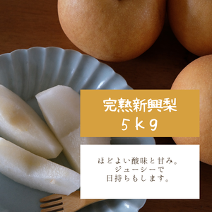 完熟新興梨5キロ