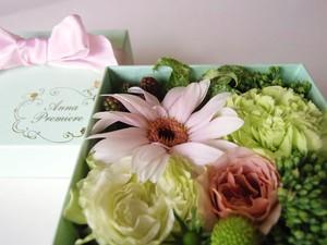 プチギフト 生花 SS ミントグリーン ボックスフラワー(Box Flower Mint Green  SS)