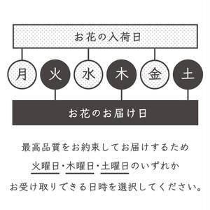 ガーベラ蕾50本mix 開花の魅力(ADORE FLOWCA)
