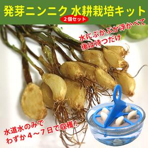 ニンニクスプラウト(発芽にんにく)水耕栽培キット PUKA・RIN 2個セット