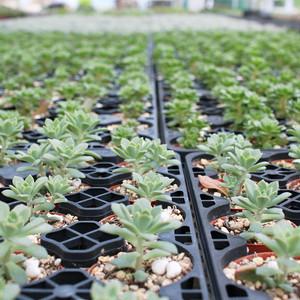 河合孝徳さん 多肉植物寄せ植えアソート(セメント陶器付き)グレー