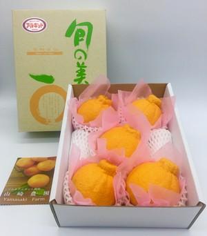 露地不知火 レギュラー1.8kg(5〜6玉) アルギット栽培