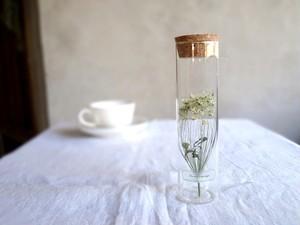 【受注生産】植物標本 Botanical Collection■スリムボトル■ホワイトレースフラワー
