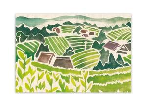 ポストカード・荒堀の茶畑
